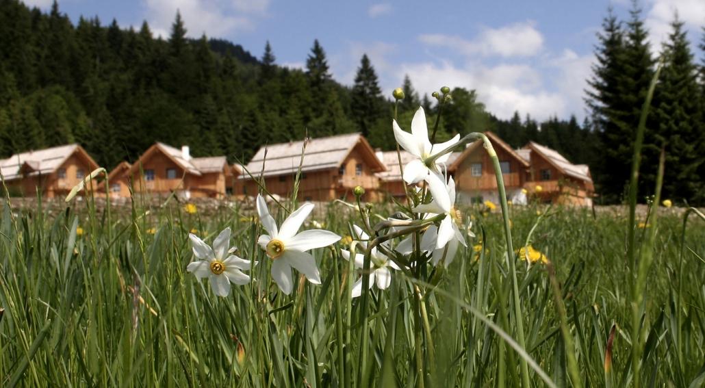 Hagan Lodge Gruppenchalets Salzkammergut Steiermark