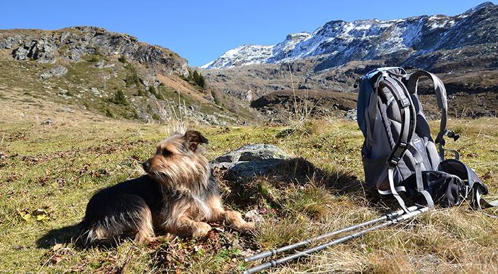 Urlaub mit Hund am Berg